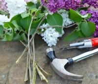 hammering-lilac-stems