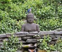 buddhist-bluejay