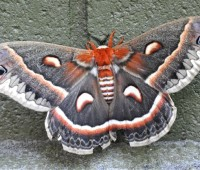 moth of all moths