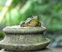 frog-on-a-pedestal