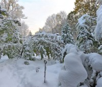 dogwood-after-storm