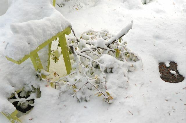 broken magnolia branches