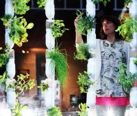 windowfarms: grow a micro-gardening dream