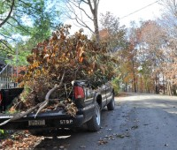 carting-away-damaged-branches