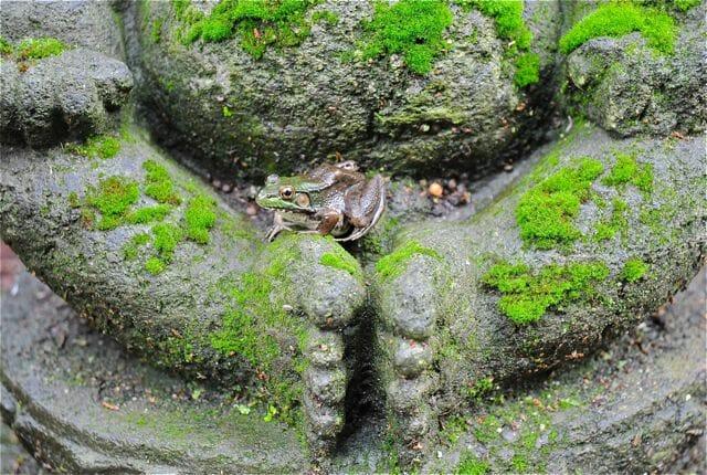 frog on buddha's lap