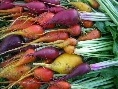three-root-grex-Beets-1