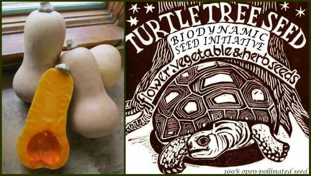 turtle tree collage