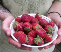 firststrawberries-ae67464d3e775be9267475a772fc09e241769592
