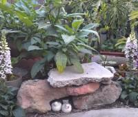 garden-spring-2012-f1285ccba748836aedb4bf9b52f1c6a9ed98109e