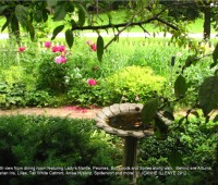 my-favorite-time-in-the-garden-jeanne-illenye-716af916eae7d0a1cda2c9c268a2a6e1339bf237