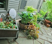 missed the workshop? container-garden 101