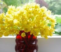 vase-of-allium-moly