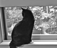 jack-on-windowsill