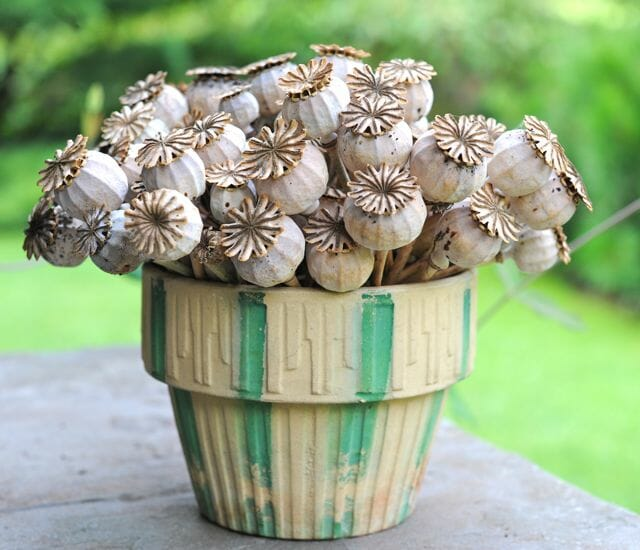poppy pod arrangement
