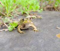 tiny-frog-1