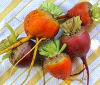 3-root-grex-beets