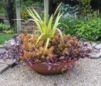 phormium-and-coleus-in-big-bowl