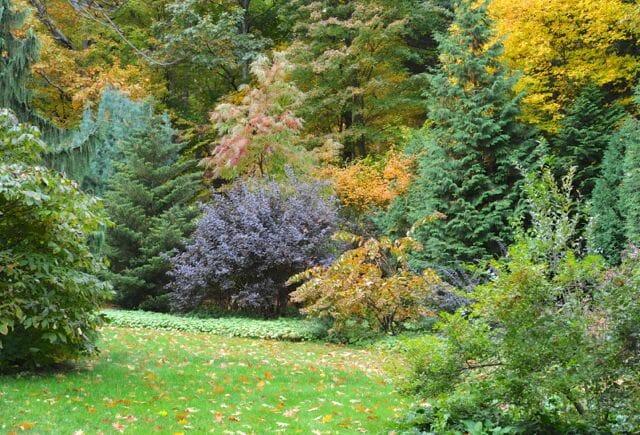 far shrub border october A Way To Garden