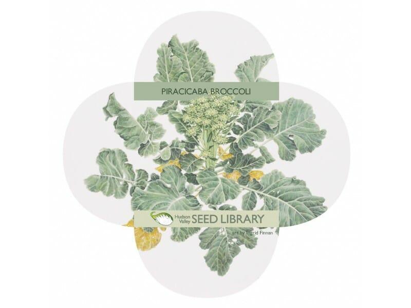 piracicaba-broccoli-front