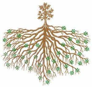 mycorrhizae illustration copyright Bio-Organics
