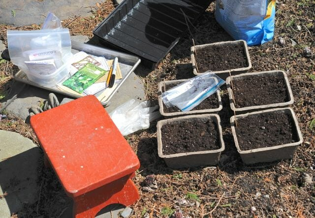 seed starting outdoors