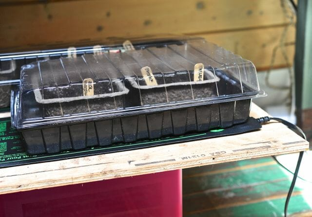 seed trays on heat mats