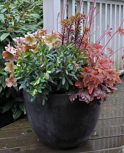 Container of euphorbia and heuhera by Hyland Garden Design