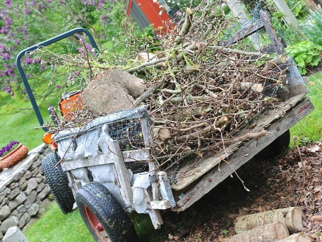 dead magnolia being carted away