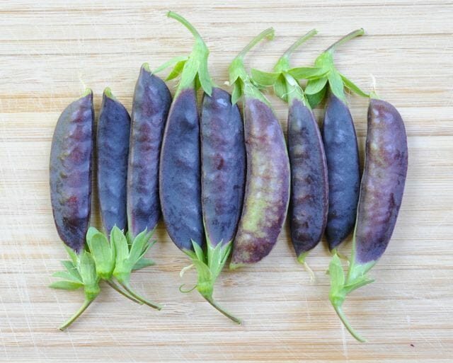 'Sugar Magnolia' purple snap pea pods