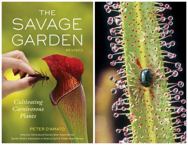 Cover of THE SAVAGE GARDEN, plus beetel on Drosera leaf (Drosera photo Jonathan Chester)