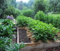 Empty spots in the vegetable garden to make use of