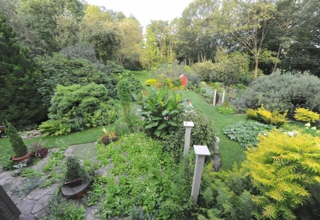West view of garden from upstairs window, August