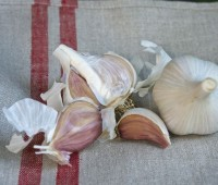 'Premium Northern White' hardneck garlic