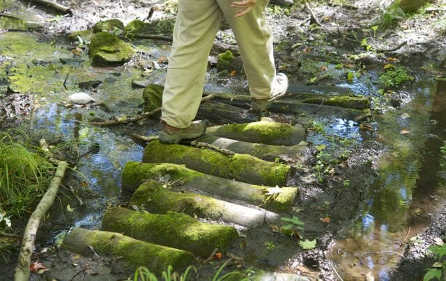 "Charley Eiseman crossing a log ""bridge"" in the woods nearby"