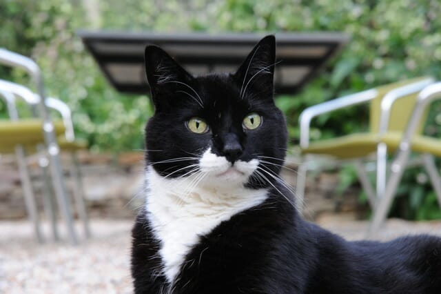 Jack the Demon Cat