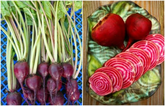 Lutz and Chioggia beets from Uprising Seeds