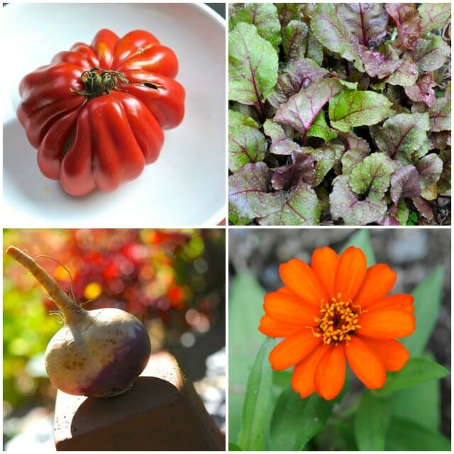 Plant types for biodynamic planting