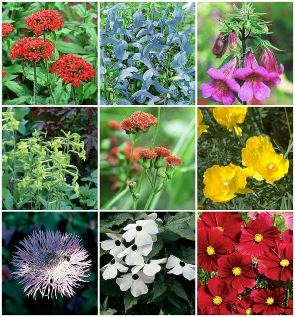 Heirloom flowers from Select Seeds