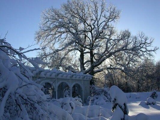 Oak in winter at Avant Gardens