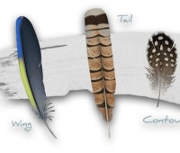 an intimate look at feathers, from cornell lab