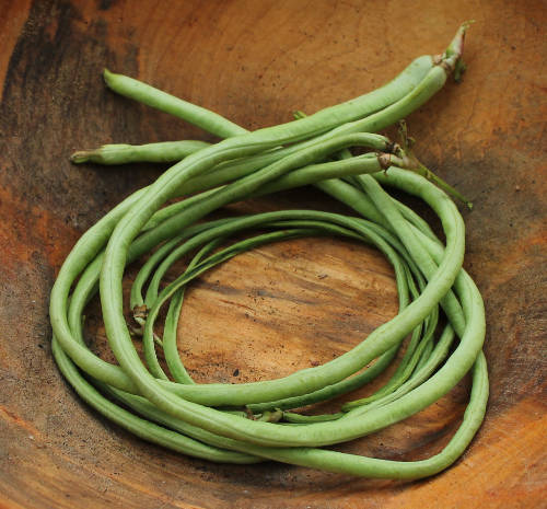 v-asparagus-bean-yard-long-red-seeded