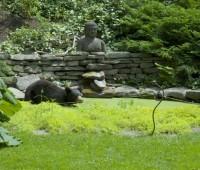 bear in water garden