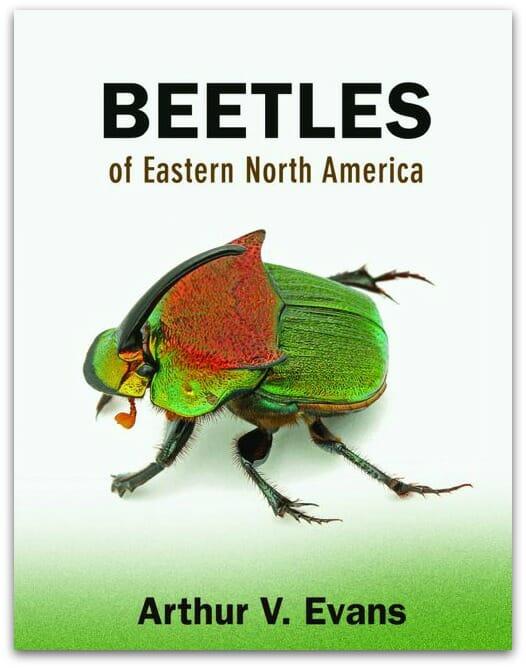 Evans_Beetles