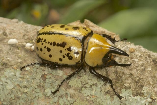 Giveaway The Wide World Of Beetles With Dr Arthur Evans A Way