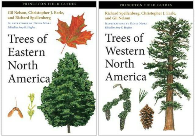 princeton trees collage