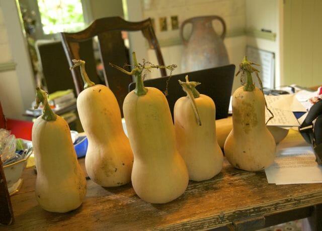 winter squash-coconut milk soup with garam masala - A Way To Garden