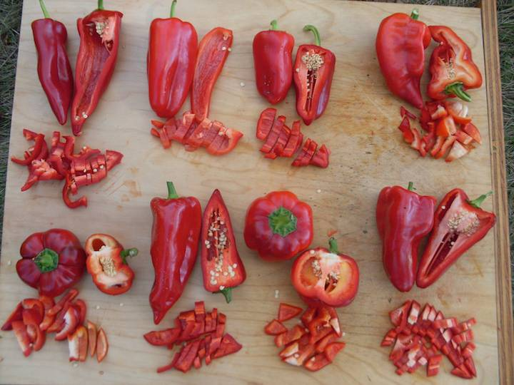 How To Grow A Wide World Of Peppers With Adaptive Seeds