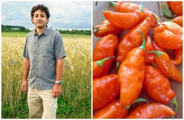 Habanero Minus The Heat Meet The Habanada A Way To Garden