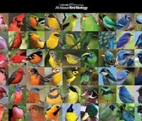 fancy male birds