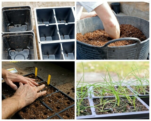 How To Start Seeds 18 Confidence, Tips For Starting A Garden